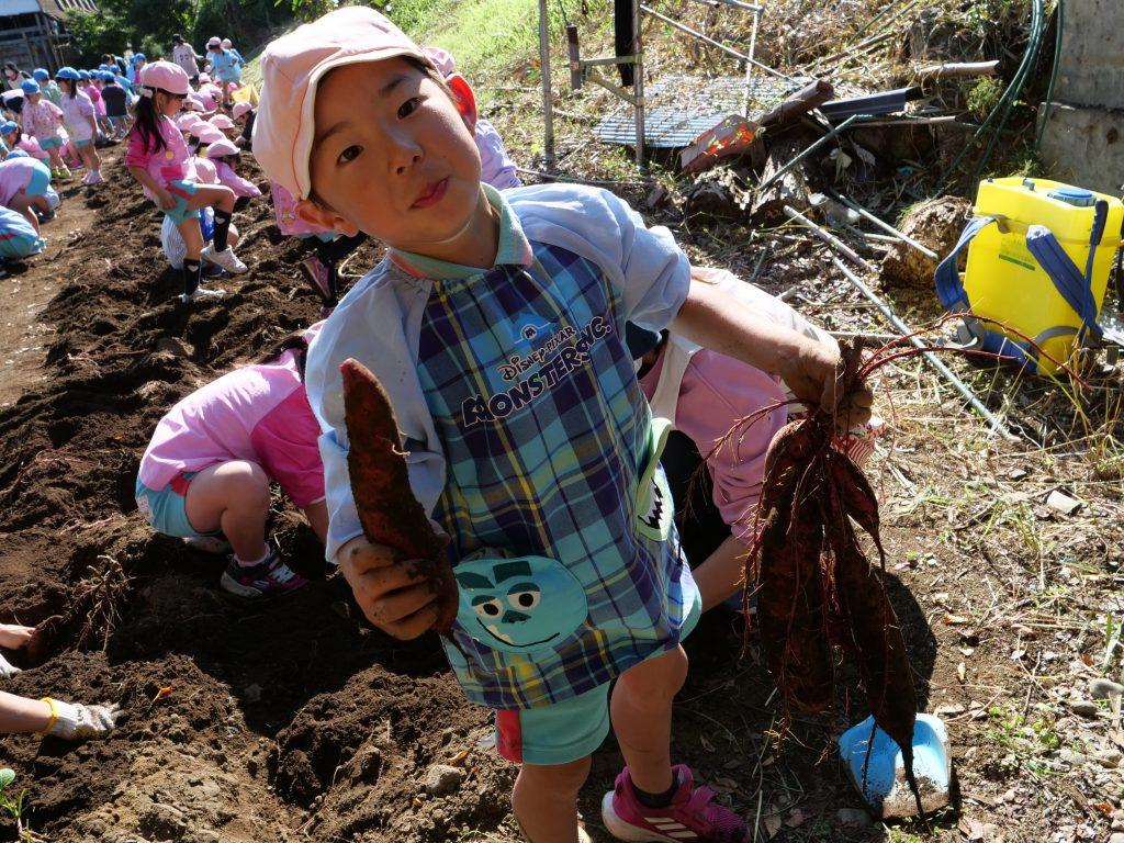 認定こども園せんだん幼稚園 さつまいも掘り2020